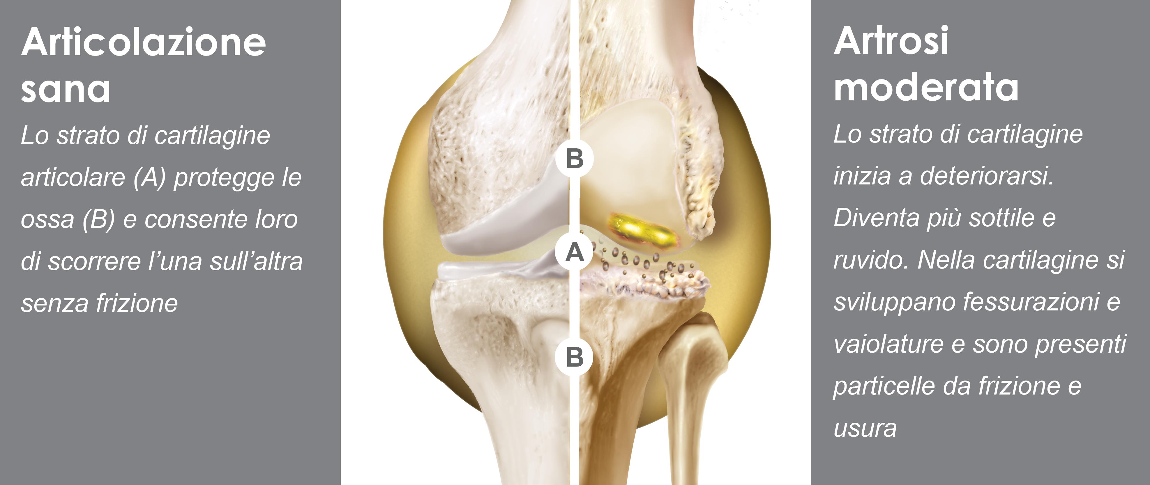 knee-website